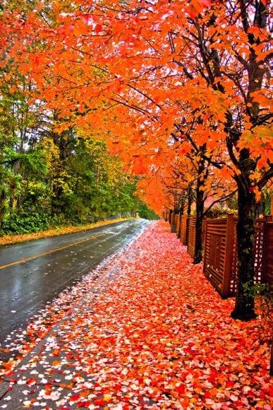 پاییز ِ تو از دلم غم انگیز تر است