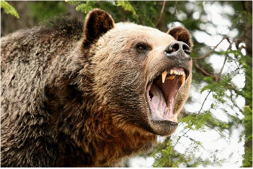مردی ۸۰ ساله جان زنش را از حملهٔ خرس گریزلی نجات داد