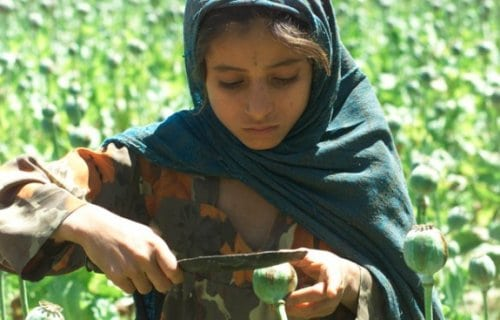 ctramprog-afghan-poppy