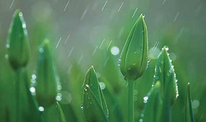 من منتظرم بهار کِی آغازد…