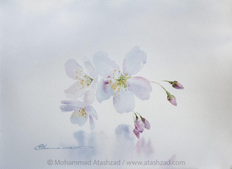Atashzad-Shahr0414 (18)