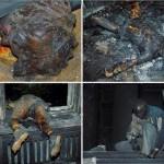 Habib050914-5-150x150 جنایت فاشیستهای اوکراین و سکوت شرمآور رسانههای «مهد دموکراسی»