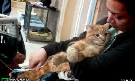شعله رئوفی حامی حیوانات به همراه ۲۰۰ گربه قربانی آتشسوزی شد