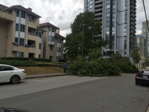 downed-tree-coquitlam