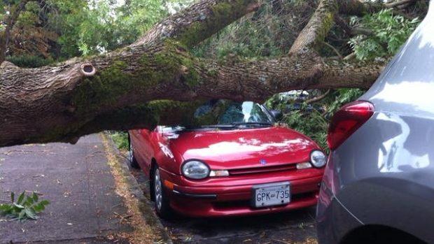 توفان در ونکوور بزرگ باعث قطع برق ۲۰۰ هزار خانه شد + تصویر