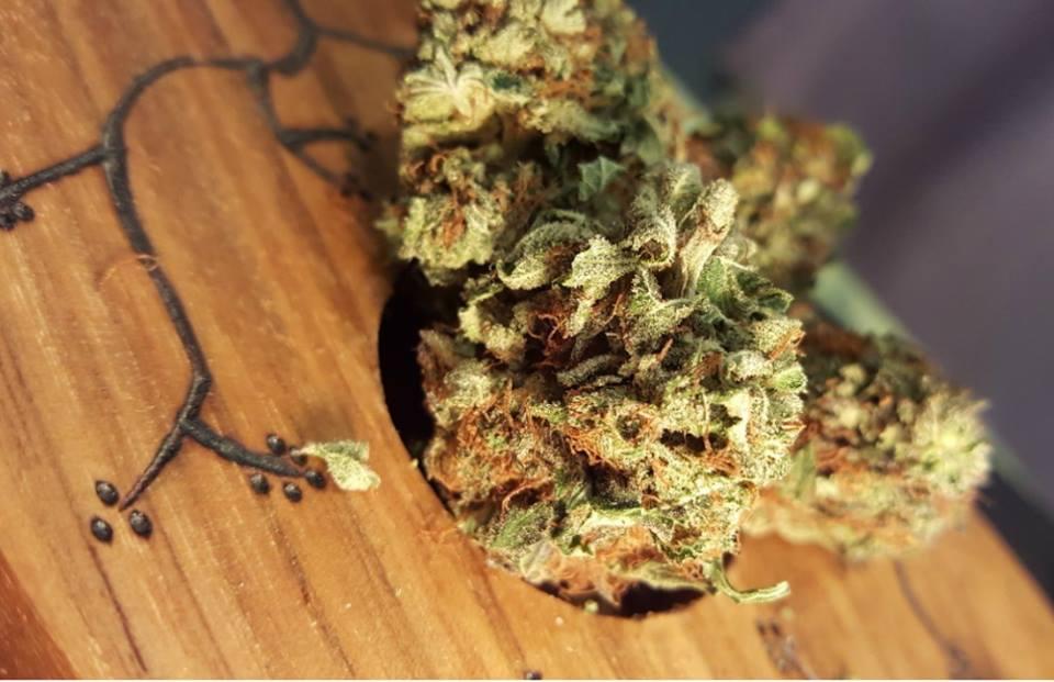 معرفی قوانین جرمزدایی از مصرف تفریحی ماریجوآنا