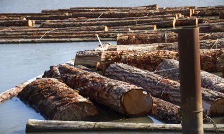 مقررات امریکایی برای صدور انواع چوب و محصولات دامداریهای کانادایی