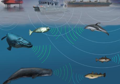 Ocean-Noise-Mike-Thompson-NOAA-SBNMS-458×320