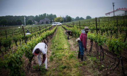 وحشت اخراج از کانادا مابین کارگرهای فصلی