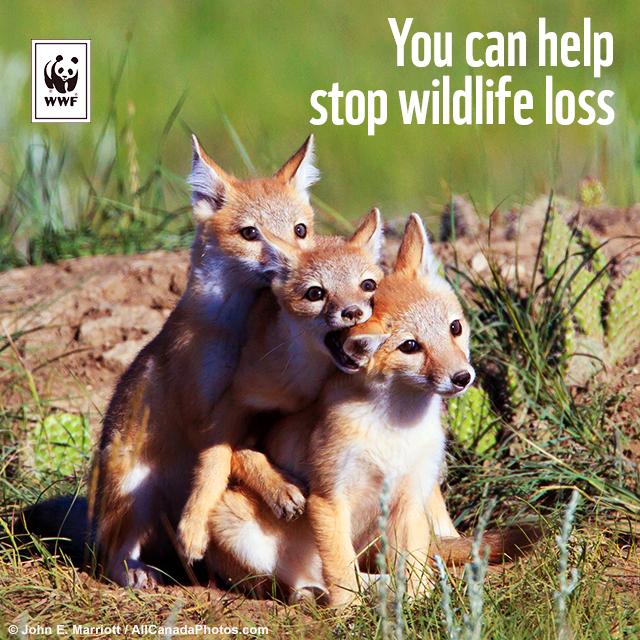 صندوق جهانی طبیعت: کاهش جمعیت نیمی از گونههای جانوری کانادا