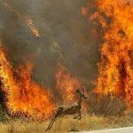 «خائیز در آتش»