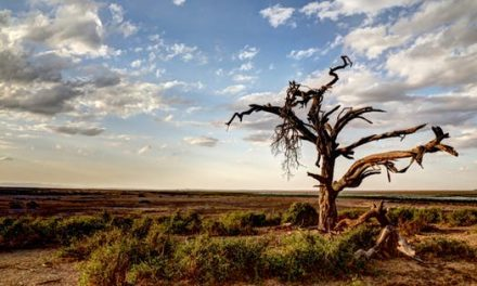 پس از آنکه آخرین درخت جان سپرد