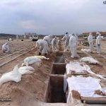 مرگ و میر فاجعه بار در اثر کرونا در ایران را متوقف کنیم!
